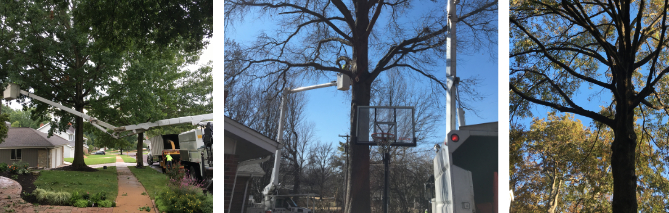 St. Louis Tree Trimming Services
